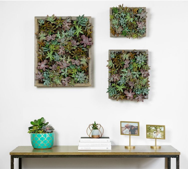 how to make succulenyt wall